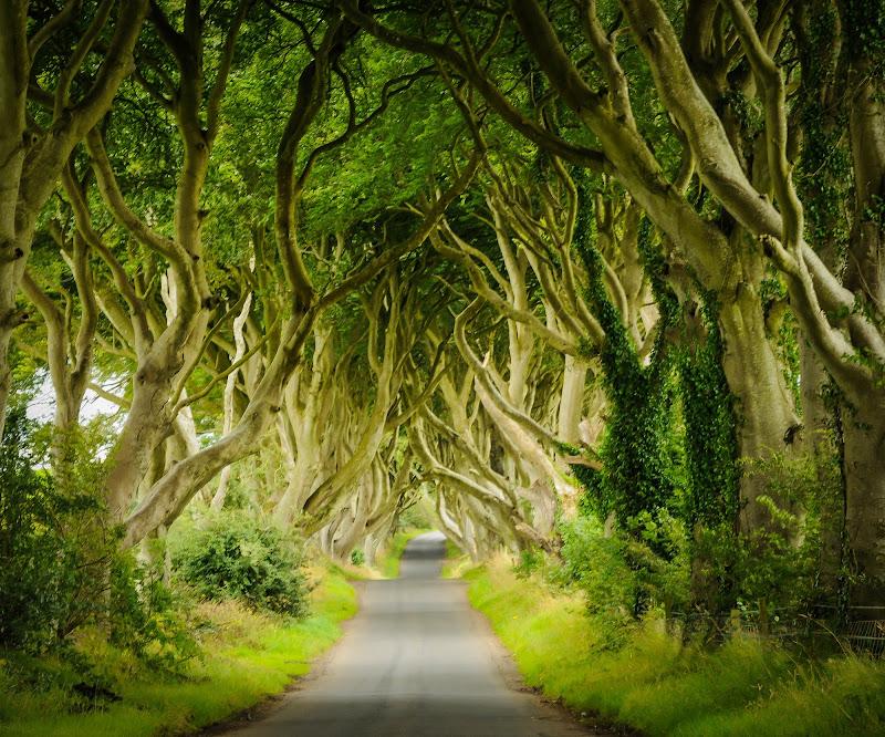 Il bosco degli elfi di paola grassi