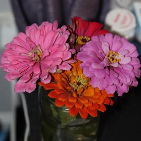 Pretty Flowers by Rohan Jackson - Flowers Flower Arangements