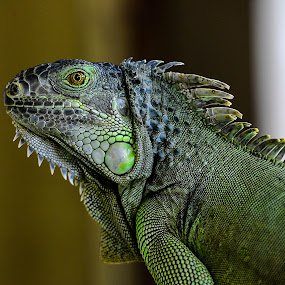 Davao Dragon by Dave Lerio - Animals Other