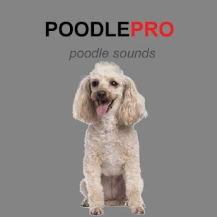 Poodle Dog Sounds & Dog Barks - náhled