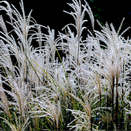 by Liz Okon - Nature Up Close Leaves & Grasses
