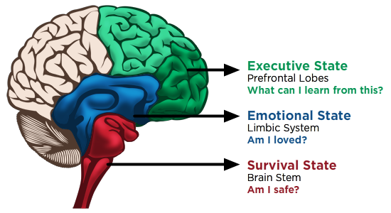 an info graph of the 3 brain regions and how trauma affects each area: the brain stem, the limbic system, and the prefrontal lobes.