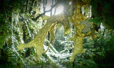 Photo: So grateful for lichen, in the woods, and the light.