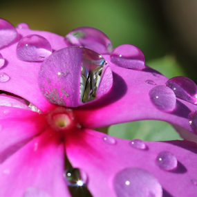 by Philip Kruger - Nature Up Close Natural Waterdrops