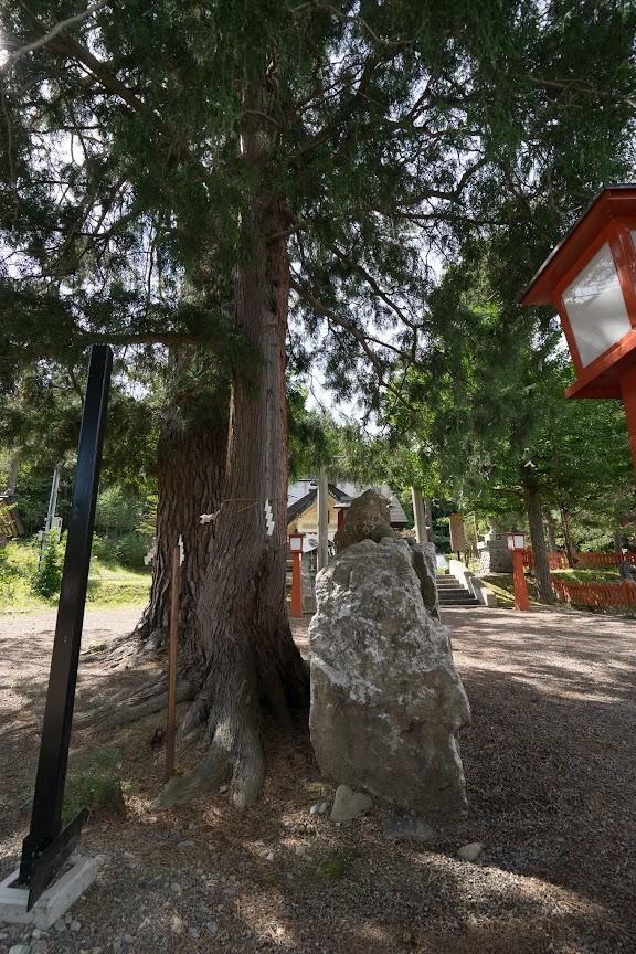 縁結びの大木「神杉」