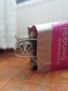 les chats ont aiment leurs cachettes