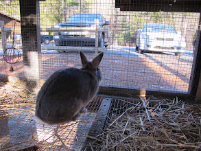 Photo: Your first greeter at Camp Toccoa may be Clyde T. Rabbit!  Say hello, he's very friendly!
