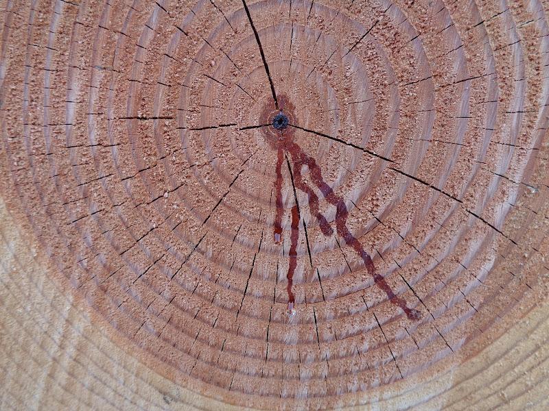 Gli alberi tagliati piangono...  di FLORANS