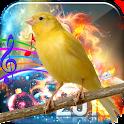 Canary Bird Sound icon
