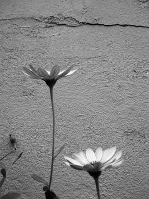 Les fleurs du mal. di ;Lau