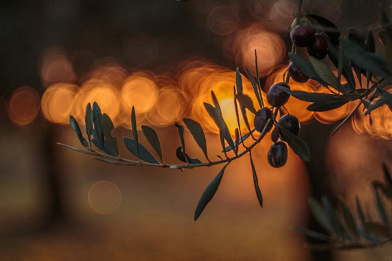 Olive al tramonto di prometeo