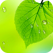 Leaf Live Wallpaper 2018 Free – HD Background 3D