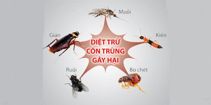 Kết quả hình ảnh cho ưu điểm của các dịch vụ diệt côn trùng