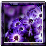 Purple Flowers Wallpapers Icon