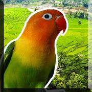 Masteran Lovebird Offline