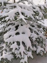 Photo: C4010009 Krynica - juz kwiecien a tu snieg