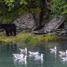 Black Bear Territory by Kathy Suttles - Animals Other