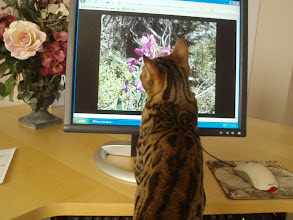 Photo: He also likes to watch TV and is fascinated by the computer.