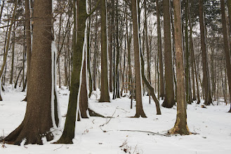 Photo: Snowy path through the trees.