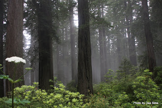 Photo: (Year 2) Day 360 - Swirling Fog in the Redwoods