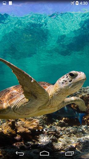 Turtle 4K Live Wallpaper