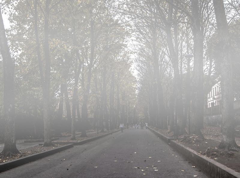Viale con nebbia di albertocastagnaphoto