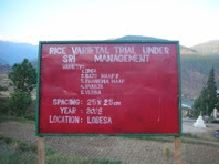 Photo: A sign at Bhutan's College of Natural Resources research farm in Lobesa detailing a field trial of SRI conducted during the 2008 season.  4 rice varieties were tested with SRI methods: 2 released varieties (Bajo Maap 2, Khangma Maap), an introduced variety (IR 64) and a local variety (Nyabja).  [Photo courtesy of Kharma Lhendup, Bhutan, 2008]