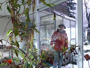 Photo: Nepenthes rafflesiana und N. pervillei