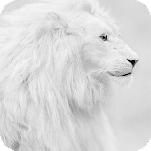 White Lion HD Live Wallpaper