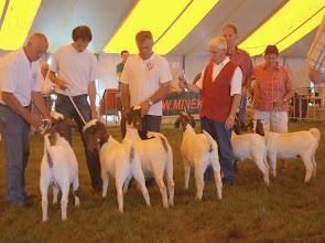 Photo: Rubriek 5: boer lammeren geboren tussen 24-2 en 18-3-2012.  1a. Billy 1; 1b. Maria 6; 1c. Billy 2; 2a. Femke v/d/ Limmerik; 2b. Sanne; 2c. Liza.