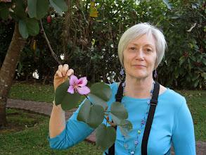 Photo: Many beautiful orchids in the Bougainvilla Hotelgarden near San Jose