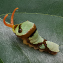 Snake Caterpillar