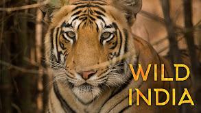 Wild India thumbnail