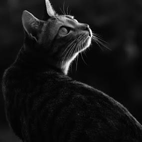by Re Rahnavarda - Animals - Cats Portraits