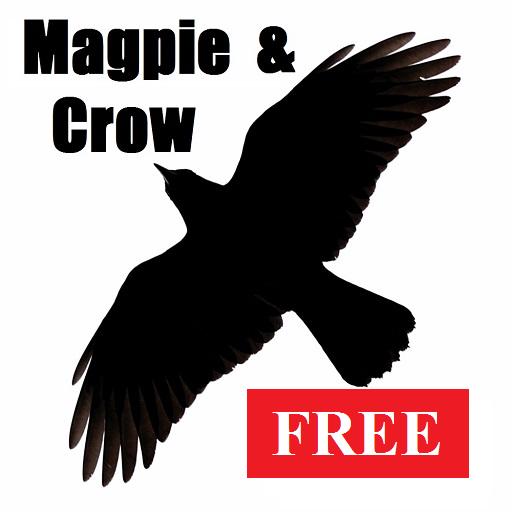 Magpie & Crow Calls