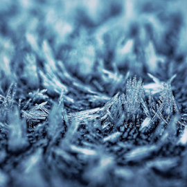 Frost  by Todd Reynolds - Abstract Macro