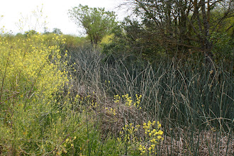 Photo: Wildhorse Agric Buffer - NE Canal