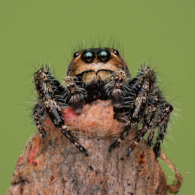 by Sjubaidah Luvis - Animals Insects & Spiders