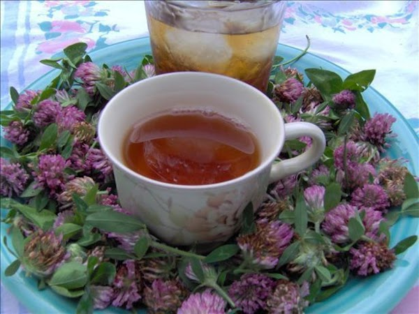 Red clover Tea1 cup red clover blossoms 2 tablespoons mint4 cups waterInspect flowers and...