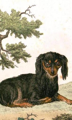 ヴィンテージ犬の写真のジグソーパズル