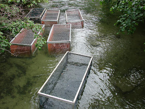 Photo: Salmon holding pens in Pullen Creek.