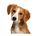 صدای حیوانات ، آموزش کودکان🐶 icon