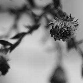 by Dušan Gajšek - Nature Up Close Gardens & Produce