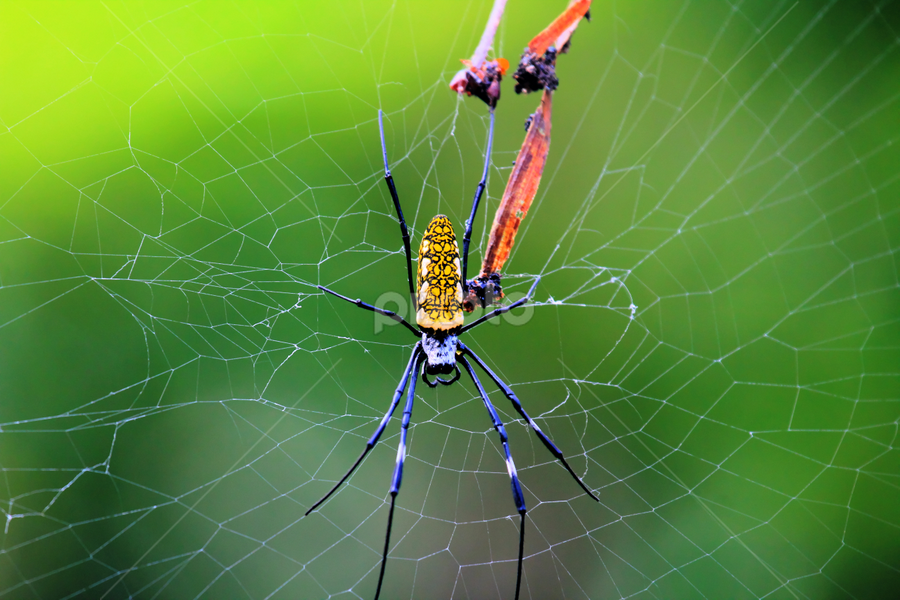 by Bahari Hutabarat - Animals Insects & Spiders