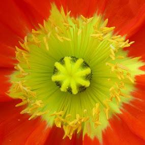 Yellow - Nature architecture by Shankara Narayanan - Nature Up Close Flowers - 2011-2013 ( macro, nature, petals, spring, yellow flower, flower )