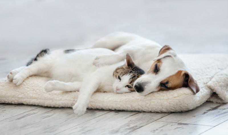 Katze und Hund beim Doesen - Darf der Hund mit ins Bett?