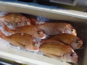 Photo: 真鯛10匹でした。・・・スイマセン。ピンボケです。