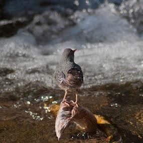 by Valerie Aebischer - Animals Birds