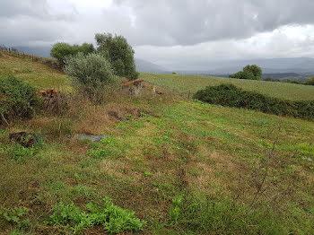terrain à Afa (2A)