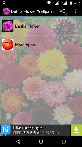 Dahlia Flower HD Wallpaper